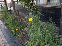 kiiro-hana_H28-0507.jpg