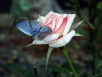 butterfly_H28_0916.jpg